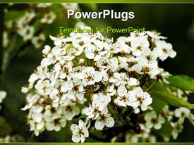 PowerPoint template displaying a number of apple blossoms together with leaves in the background