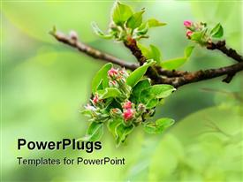 PowerPoint template displaying a tree branch with some blossoming green leaves and pink flowers