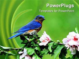 Male Eastern Bluebird (Sialia sialis) on a hibiscus bush powerpoint template
