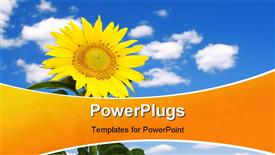 PowerPoint template displaying amazing sunflower and blue sky background