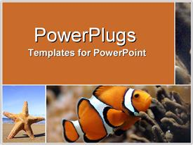 PowerPoint template displaying a star fish and a golden fish