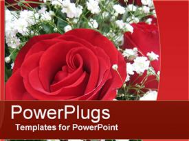PowerPoint template displaying perfect Rose