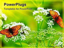 PowerPoint template displaying two butterflies on two flowers with greenish background