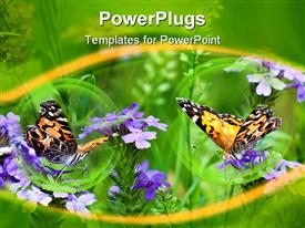 PowerPoint template displaying two Painted Lady butterflies in a field of wild verbena