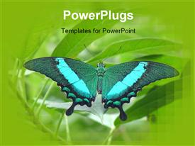 PowerPoint template displaying beautiful butterfly perches on green leaf in garden