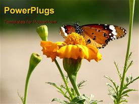 Beautiful butterfly on a beautiful flower powerpoint template