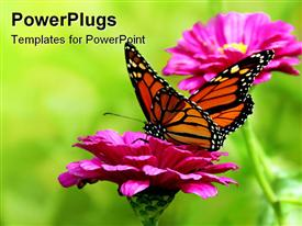 PowerPoint template displaying colorful yellow and orange butterfly on a pink flower