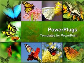 PowerPoint template displaying nine tiles with lots of colorful butterflies on them