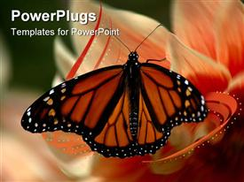 Beautiful monarch butterfly caught on a sunny afternoon by a peach flower presentation background