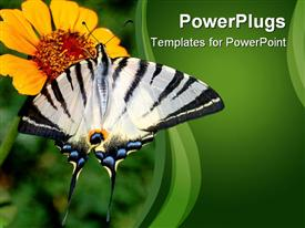 Big, beautiful butterfly with bright striped coloration collects pollen from a flower powerpoint design layout
