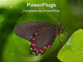 PowerPoint template displaying clolorful large red and black butterfly resting on a leaf