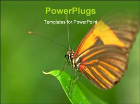 Brown orange butterfly on a leaf powerpoint theme
