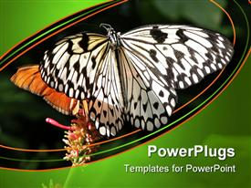 PowerPoint template displaying butterflies at the Butterfly Conservatory, Niagara Fall, Ontario