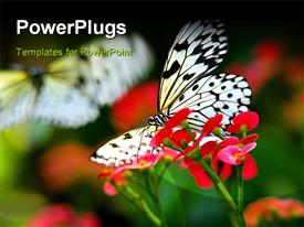 PowerPoint template displaying butterfly