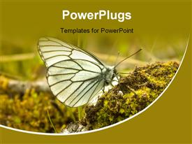 PowerPoint template displaying butterfly drinks water from a moss