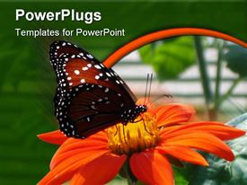 PowerPoint template displaying a butterfly on the flower with greenery in the background