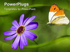 PowerPoint template displaying orange and white butterfly landing on purple flower