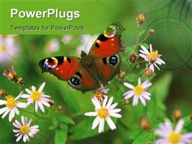PowerPoint template displaying butterfly with flowers