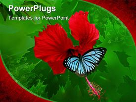 PowerPoint template displaying butterfly sucking nectar from hibiscus flower