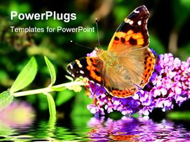 PowerPoint template displaying butterfly on purple flower reflection in water