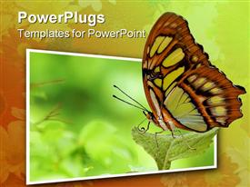 Butterfly resting on a leaf isolated over white powerpoint design layout