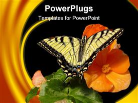PowerPoint template displaying a butterfly on a flower with leaves