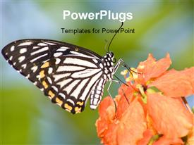 PowerPoint template displaying a butterfly with a flower and blur background