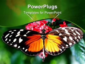 PowerPoint template displaying close up of butterfly with wide open wings on rose flowers and blurred green background
