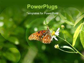 PowerPoint template displaying a lovely colorful butterfly perching on a yellow flower