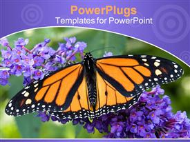 Close-up photo of a monarch butterfly on a purple-blue butterfly bush powerpoint theme