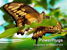 PowerPoint template displaying drab brown and black butterfly sitting on bright green leaf