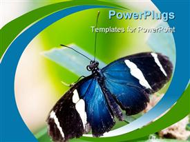PowerPoint template displaying exotic butterfly sitting on a green leaf in the background.