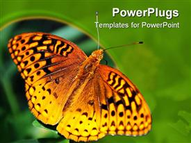 PowerPoint template displaying furry orange butterfly with spotted wings spread sitting on a plant in the background.