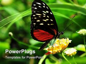 PowerPoint template displaying golden helicon butterfly perches on flower to suck nectar