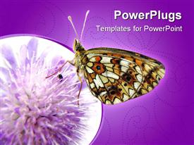 PowerPoint template displaying a butterfly on a flower with purple background
