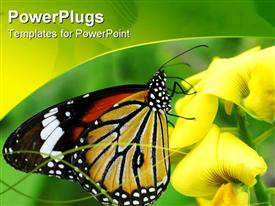 PowerPoint template displaying large colorful butterfly with yellow flowers and green background