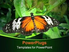 Large butterfly resting on a leaf template for powerpoint