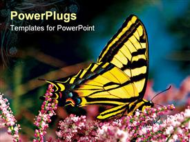 PowerPoint template displaying beautiful yellow and black butterfly perching on a flower