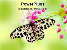 Macro Rice Paper Butterfly on pink flower template for powerpoint
