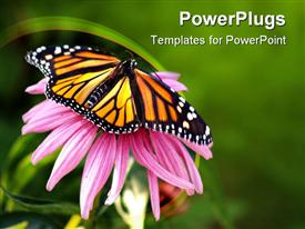 PowerPoint template displaying close up of Monarch butterfly on coneflower in green background