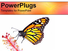 PowerPoint template displaying monarch Butterfly resting on a flower