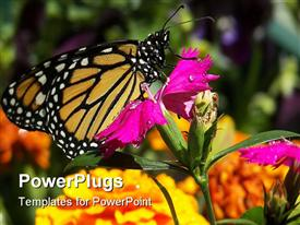 PowerPoint template displaying a large butterfly resting on a wide purple flower