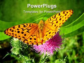 PowerPoint template displaying big yellow butterfly on a natural pink flower stalk