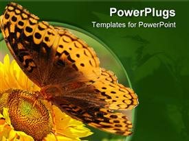PowerPoint template displaying beautiful butterfly perching on flower sucks nectar