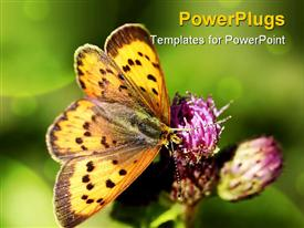 Pretty golden butterfly resting on a purple flower template for powerpoint
