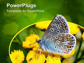 Small butterfly, sitting on yellow flowers, busy drinking nectar presentation background
