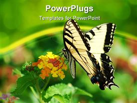 PowerPoint template displaying yellow and black swallowtail butterfly on cluster of tiny flowers, green background