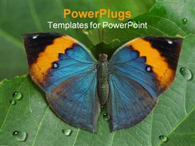 PowerPoint template displaying a butterfly sitting on a leaf with water droplets