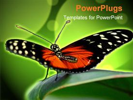 PowerPoint template displaying orange and black butterfly sits on green leaf