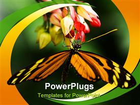 PowerPoint template displaying tropical butterfly Tiger heliconian on red flowers in the background.